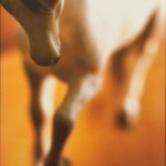 Deborah Bright (American, b. 1950) Muff Teaser, from the series BEING AND RIDING, 1997 (Lot 1089, Estimate $800-$1,200)