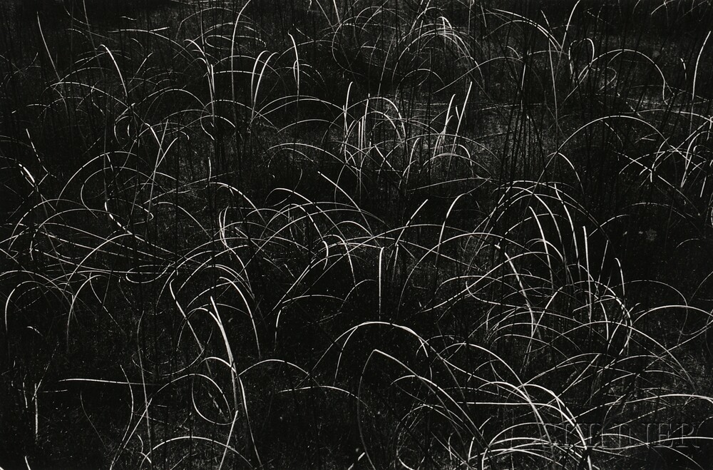 Harry Callahan (American, 1912-1999) Grasses, Wisconsin, 1959 (Lot 117, Estimate: $2,000-3,000)
